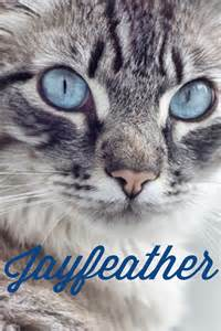 Real Warrior Cats Jay Feather
