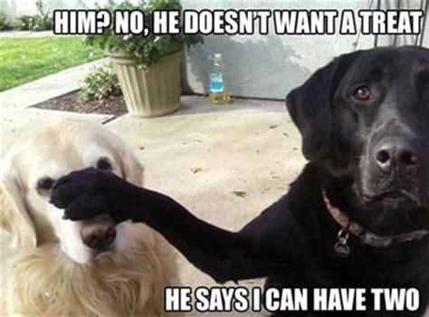 funny pics  dogs  love  food