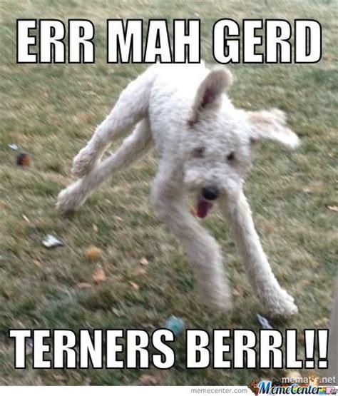 Derp Dog Meme - my derp dog by nigelhauritz meme center