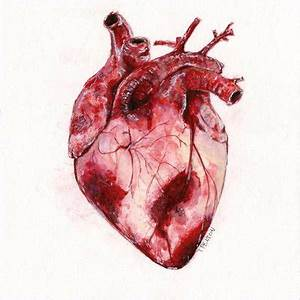 Watercolor Human Heart by taylorpentonart on DeviantArt