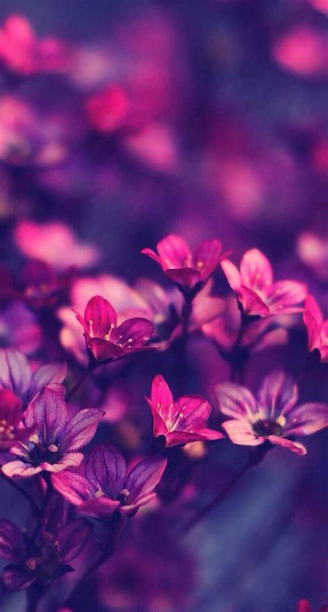 Purple plant, dark background, pattern, beautiful, floral, purple flowers, 5k. Pink and purple flowers   Purple flowers wallpaper, Purple ...