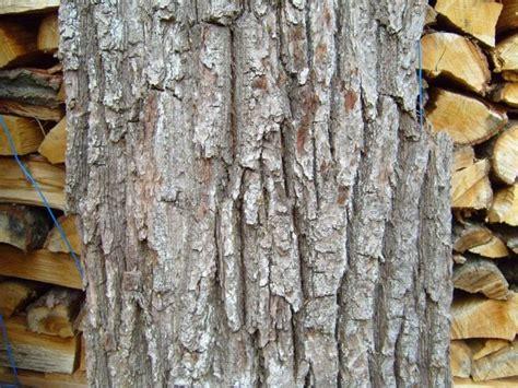 รูปภาพฟรี: เก่า ต้นไม้ เปลือกไม้