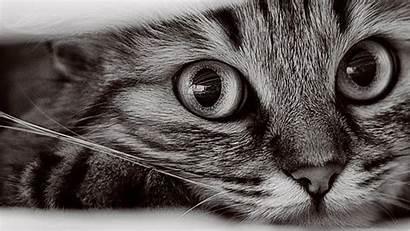 Cat Wallpapers 1366 768 Walldiskpaper