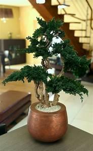 Pflege Bonsai Baum Indoor : bonsai baum pflege garten bonsai baum pflanzen pflegen ~ Michelbontemps.com Haus und Dekorationen