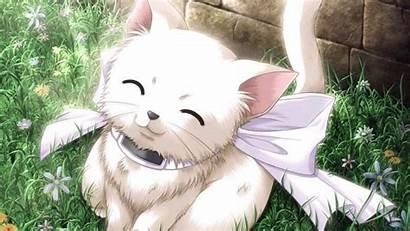 Anime Animal Wallpapers Kitty Animals Desktop Cats