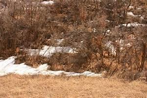 camouflage 5 deer by wildfotog on DeviantArt