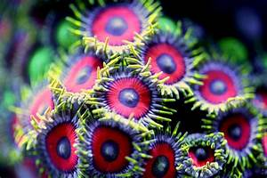Vibrant Macro Photographs of Coral by Felix Salazar | Colossal
