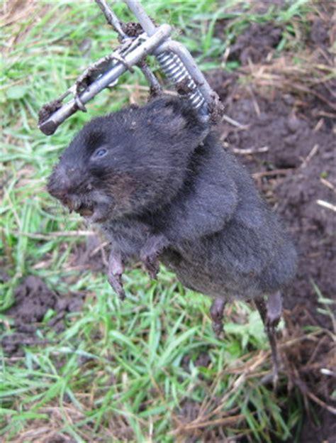 Welches Tier Frisst Pilze Im Garten by W 252 Hlmaus Oder Maulwurf Typische Anzeichen Und Unterschiede