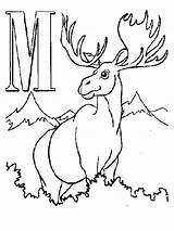 Moose Coloring Pages Alphabet Printable Letters Animal Antler Antlers Drawing Cartoon Realistic Getdrawings Outline Elk Getcoloringpages Hunting sketch template