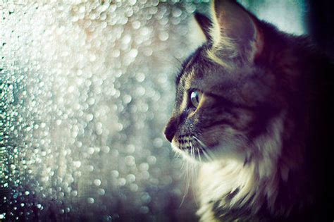 Beautiful Cat Shot Pictures, Photos, And Images For