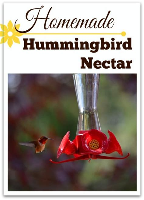 rise and shine march 8 homemade hummingbird food dyson
