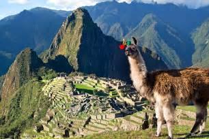 Llamas Machu Picchu Peru
