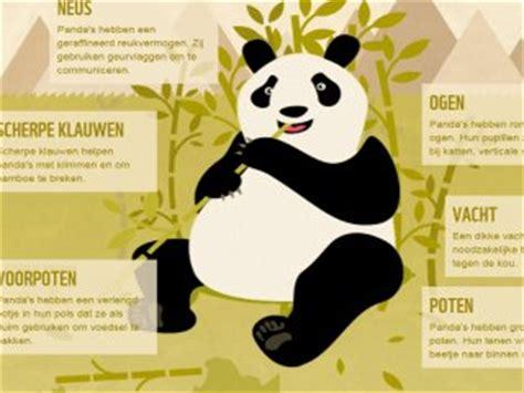 alles  de panda  reuzenpanda wnf
