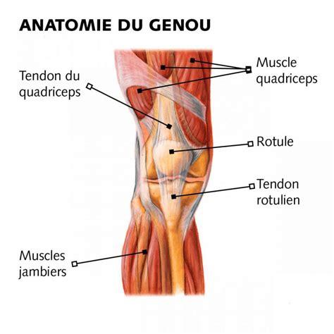douleur a l interieur du genou acupuncture imedichina ch cas etudes cliniques acupuncture