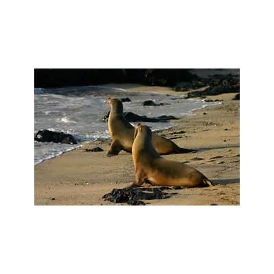 File:Galápagos sea lions Isabela.jpg - Wikimedia Commons