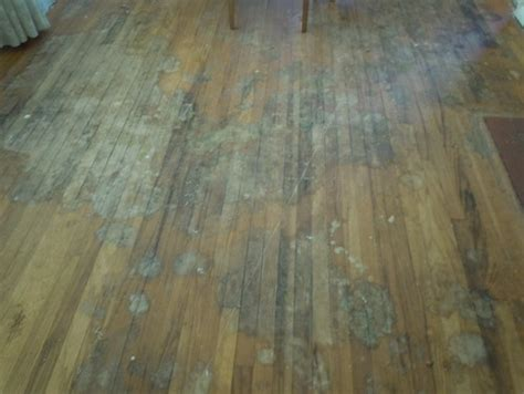Cat Hardwood Floor Hydrogen Peroxide by For Urine Stained Oak Hardwood Floors