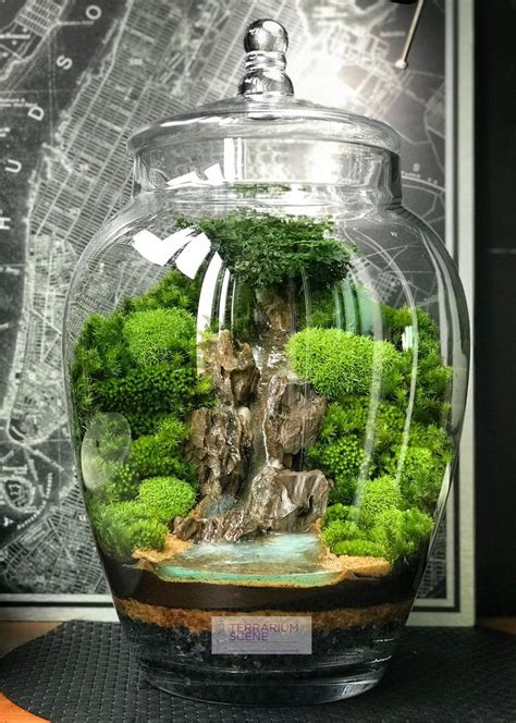 pin de sariyahs world en  pinterest likes plantas
