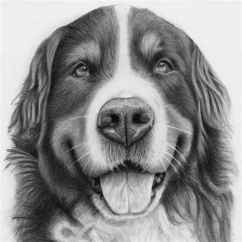 pet portraits animal art  uk artist donna dog