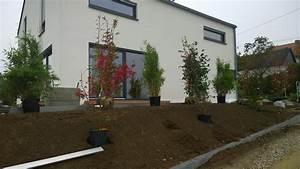 Sichtschutzbepflanzung moderner sichtschutz im garten for Sichtschutz terrasse modern