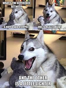 1000+ ideas about Husky Jokes on Pinterest | Bad Pun Dog ...