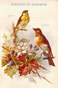 102 best ideas about Free Vintage Bird Graphics on ...