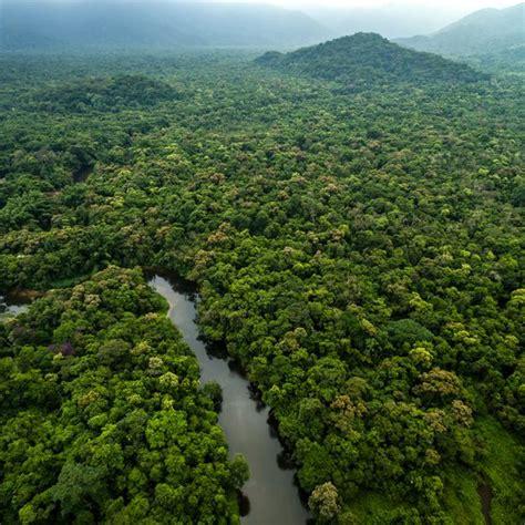 introduction   amazon rainforest usa today