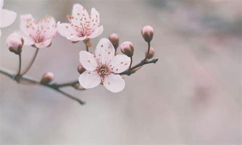 2 月 誕生 花