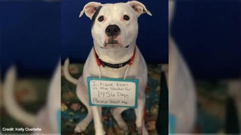 adopt  maine shelter seeks  home