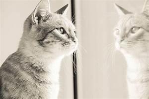 Malzpaste Für Katzen : my pet gute aussicht der perfekte ruheplatz f r katzen ~ Orissabook.com Haus und Dekorationen