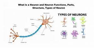 Diagram Neuron Structure