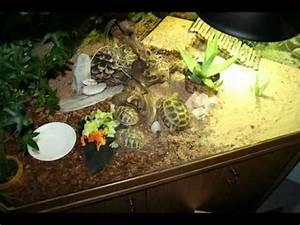unser schildkroten im terrarium und im garten youtube With französischer balkon mit schallschutz im garten