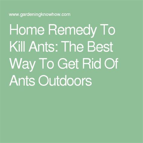 best way to get rid of ants pinterest the world s catalog of ideas