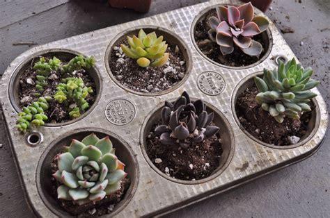 jessicandesigns diy indoor succulent garden