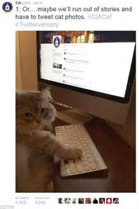 2 year work anniversary go em!! CIA tweets photo of a cat to celebrate Twitter anniversary ...