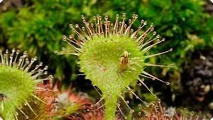 Kingdom Of Plants  2012   U2013 Recensie
