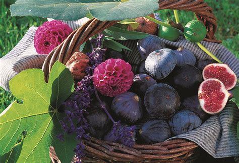 comment cuisiner des figues le figuier comment le planter et le tailler les carnets de georges delbard