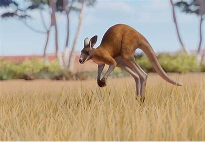 Kangaroo Zoo Planet Wiki Kanguru Merah Fandom