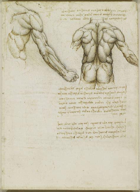 Tavole Anatomiche by Tavole Anatomiche Di Leonardo Xedizioni