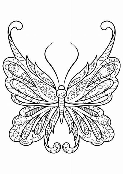 Coloring Butterfly Adults Pages