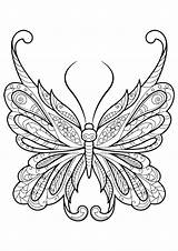 Coloring Butterfly Adults Pages sketch template