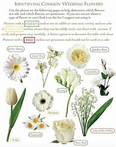 Flower Identification Guide For Cake Decorators  U22c6 Shani U0026 39 S