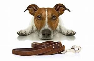 Mietwohnung Mit Hund : dog sharing teilzeit herrchen f r den hund wissen ~ Lizthompson.info Haus und Dekorationen