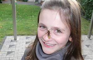 Welchen Geruch Mögen Wespen Nicht : wespen und ihr verhalten bei welchen arten droht ein wespenstich ~ Whattoseeinmadrid.com Haus und Dekorationen