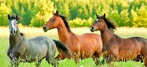 Heu Kaufen Für Pferde : alles ber pferdeheu auf was kommt s an heu ~ Orissabook.com Haus und Dekorationen