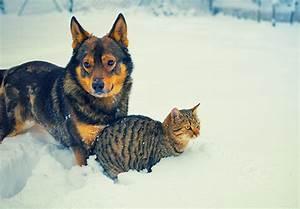 Puce De Chien : comment traiter les puces des chiens et des chats lecomment ~ Melissatoandfro.com Idées de Décoration