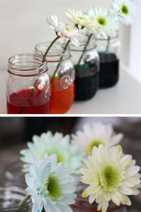 changing flower science spring experiment flowers stem check fun seed start