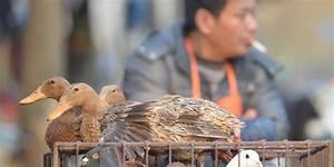 Loa Belgique Particulier : la grippe aviaire d tect e sur les oiseaux d 39 un particulier en belgique ~ Gottalentnigeria.com Avis de Voitures