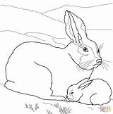 Arctic Coloring Hare Pages Baby Mother Printable Animals Polar Manatee Fox Clipart Hares Artic Bear Drawing Sheet Animal Supercoloring Easy sketch template