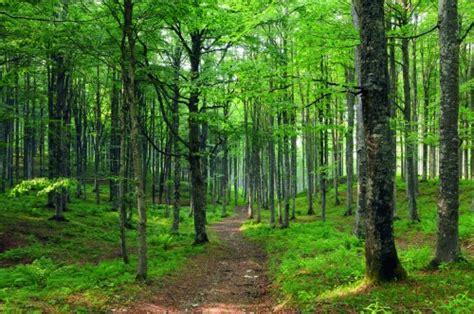 madre pianta alberi in memoria figlio morto