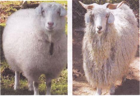 wool  animals  cbse class  science animals